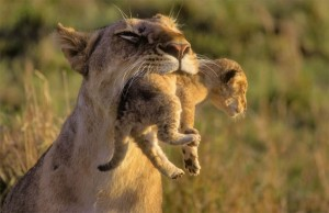 animals-with-cute-babies-06