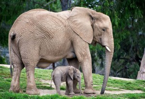 animals-with-cute-babies-27